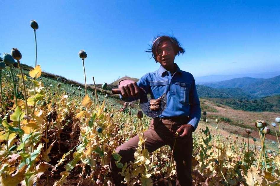 Opium Paste harvest on the Burma-Thai border, 1981.
