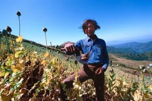 A tribesman collecting opium paste on the Thai-Burma border 1982