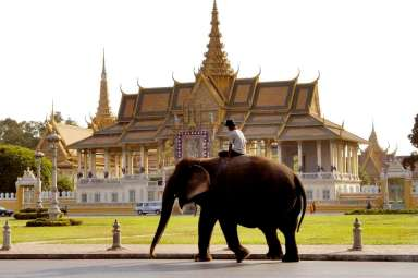An elephant making his way past the Royal Palace in the city of Phnom Penh.