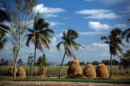 Farmland view, Issan