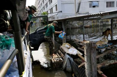 Fllooded neighborhood of Bang Phlat and Taling Chan on the western side of the Chaopraya river. Distribution of Food supplies and water from an Thai army truck. A soldier feed a group of abandoned dogs living on an elelvated shelter.